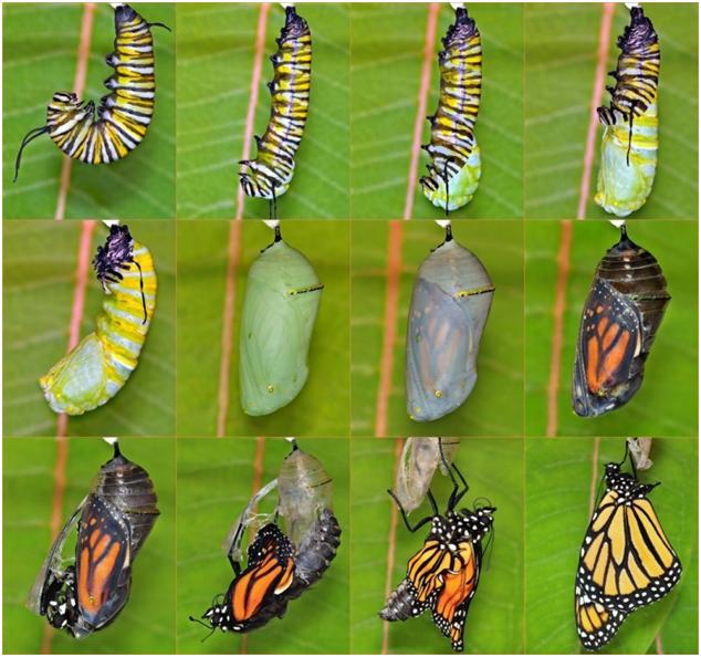 God and Evolution - Butterflies